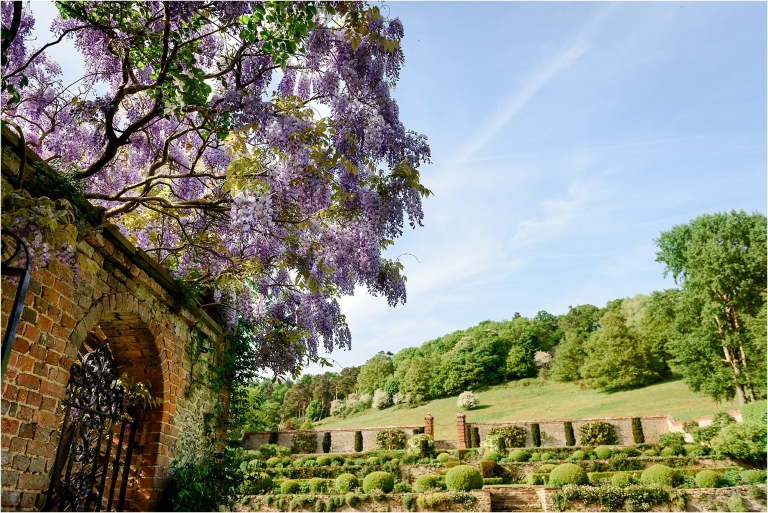 wisteria in may ngs open gardens surrey garden photographer